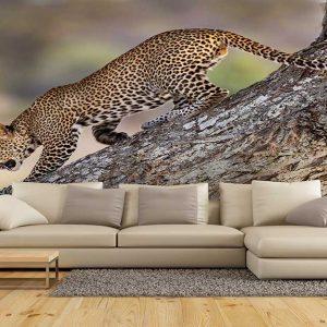 پوستر دیواری حیوانات کد h-11173