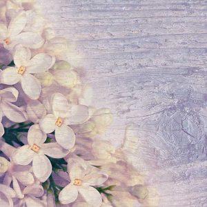 پوستر دیواری گل های بهاری کد F-8167