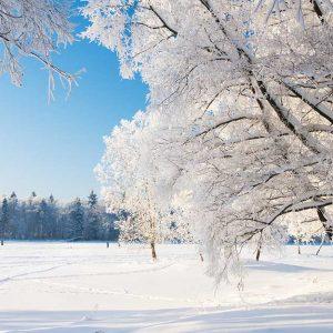 پوستر دیواری منظره زمستان کد n-6906