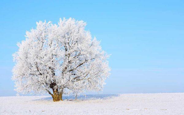 پوستر دیواری منظره زمستان کد n-6913