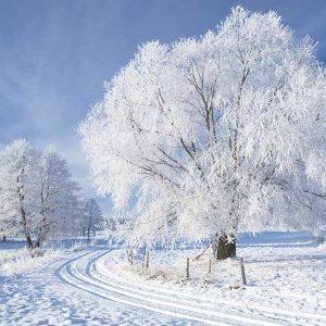 پوستر دیواری منظره زمستان کد n-6924
