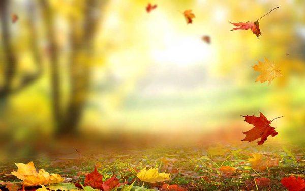 پوستر دیواری منظره پاییز کد n-6403