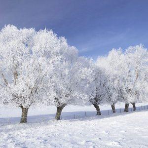 پوستر دیواری منظره زمستان کد n-6909