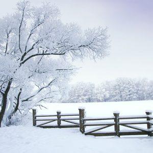 پوستر دیواری منظره زمستان کد n-6918