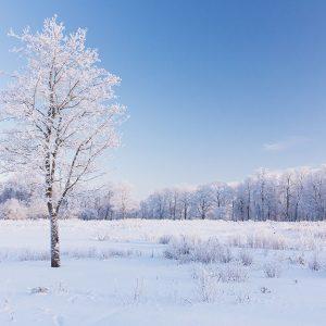 پوستر دیواری منظره زمستان کد n-6930