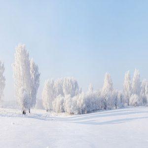 پوستر دیواری منظره زمستان کد n-6971